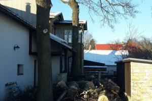 Ohtlike puude langetamine pärast