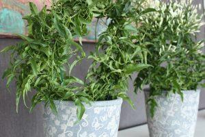 sisehaljastus taimedega